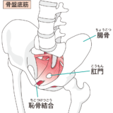 骨盤底筋鍛えるべき理由と骨盤底筋を鍛える方法